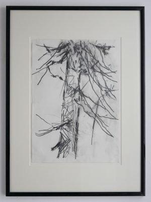 Pine Tree Study 1